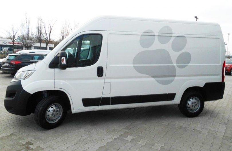 У Луцьку кошти на придбання автомобіля для відлову тварин виділять із міського бюджету, фото-1